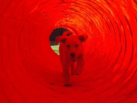 hunde tunnel bilder